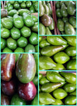 Fresh Davao Avocado JUMBO size - order price / kilo (Not Available At this Time) - Farm2Metro