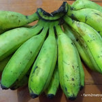 Fresh Local Banana (Latundan) - order price / kilo - Farm2Metro