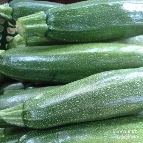 Fresh Zucchini (order price/500 grams) - Farm2Metro