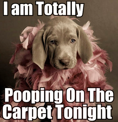 Cute Dog Memes & Why Dogs Are Better Than People - Dogs Pooping On The Carpet