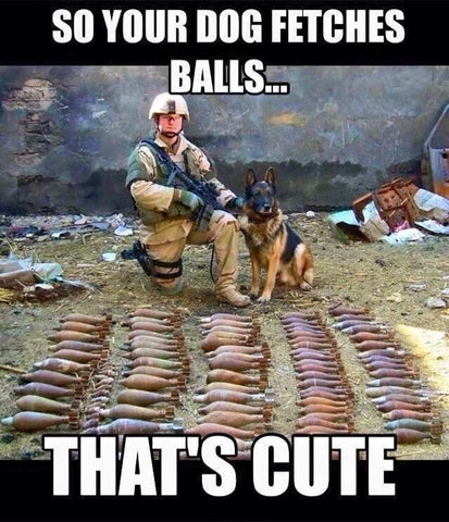 Cute Dog Memes & Why Dogs Are Better Than People - You Dog Fetches Balls
