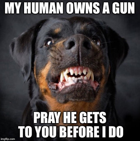 Dogs Are Better Than People - My Human Owns A Gun