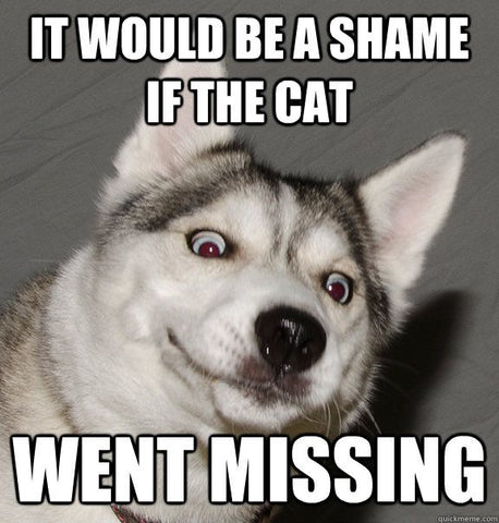 Funny Dog Memes & Why Dogs Are Better Than People - Cat Goes Missing