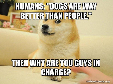 Funny Dog Memes & Why Dogs Are Better Than People - Why Are Humans In Charge
