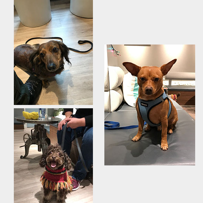 Waggle NYC Edition, Cafe Bark, Dog Cafe Trend