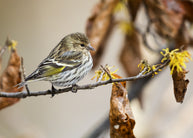Ways To Woo Winter Finches