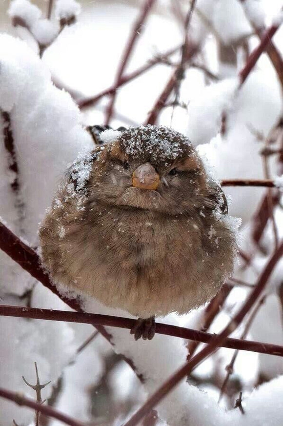 4 Amazing And Effective Ways To Attract Winter Birds
