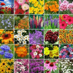Valley Farms Wildflower Meadow Seed Mix  (1 LB / covers 1000 sq. feet)