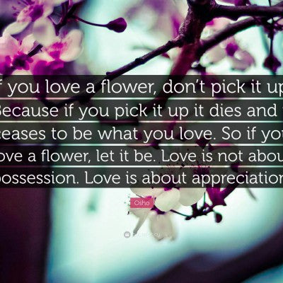 Lessons on Love and Possession