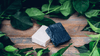 Activated Charcoal Collection