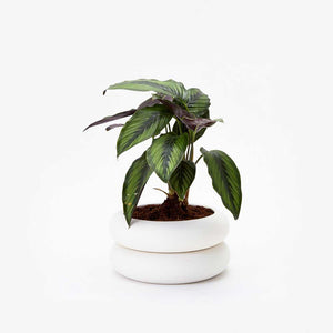 STACKING PLANTER | BLUMENGEFÄSSE | Chen Chen & Kai Williams | Areaware - Charles & Marie