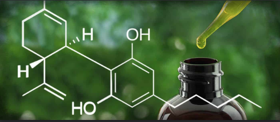 Mind Blowing Facts about CBD Oil