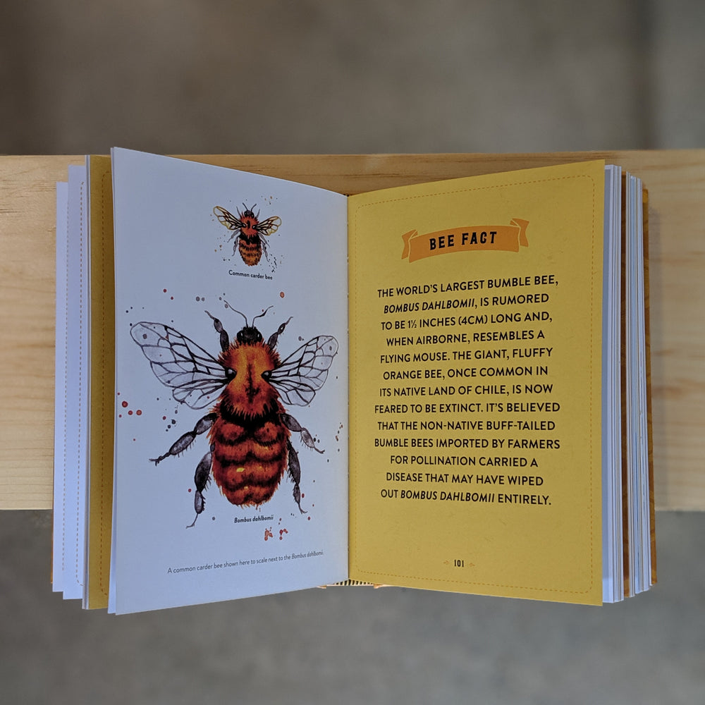 Little Book of Bees - An illustrated guide to the extraordinary lives of bees by Hilary Kearney