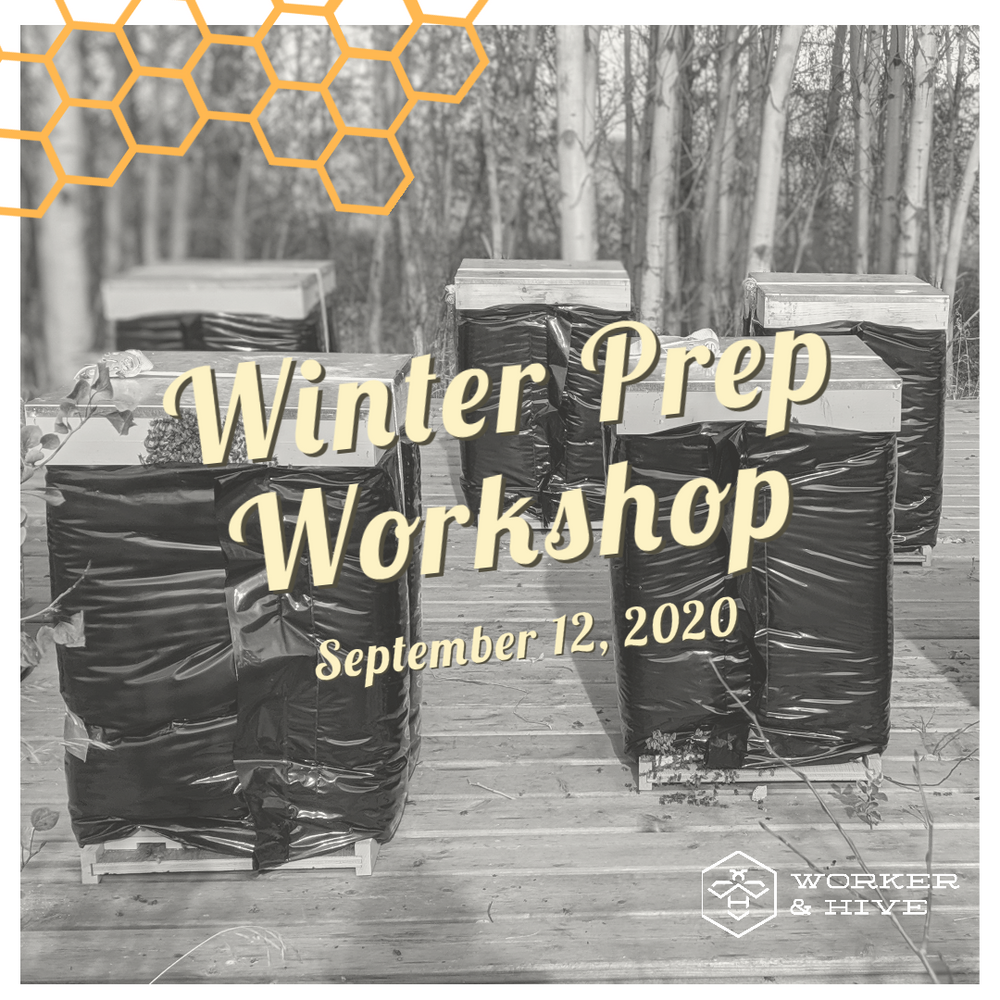 Winter Prep Workshop - September 12, 2020 11 am