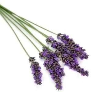 Lavender Essential Oil 15 ml-Wellness Oils & Beads