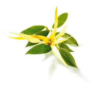 100% Pure Essential Ylang Ylang Oil