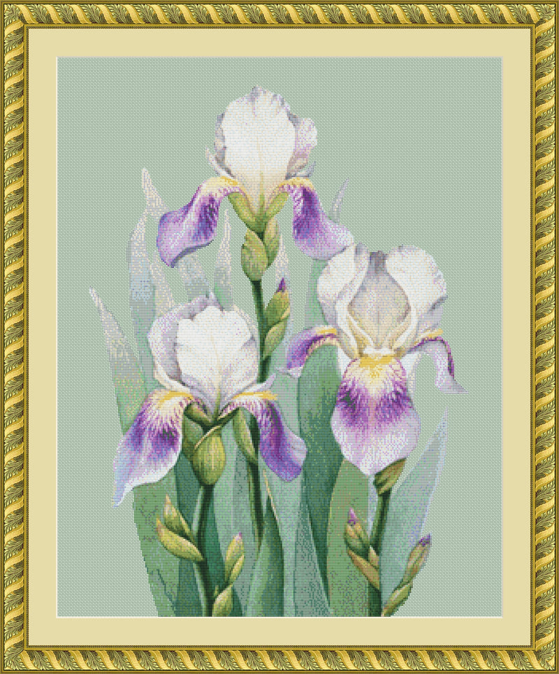 Trio of Irises
