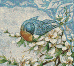 Bluebirds in Spring