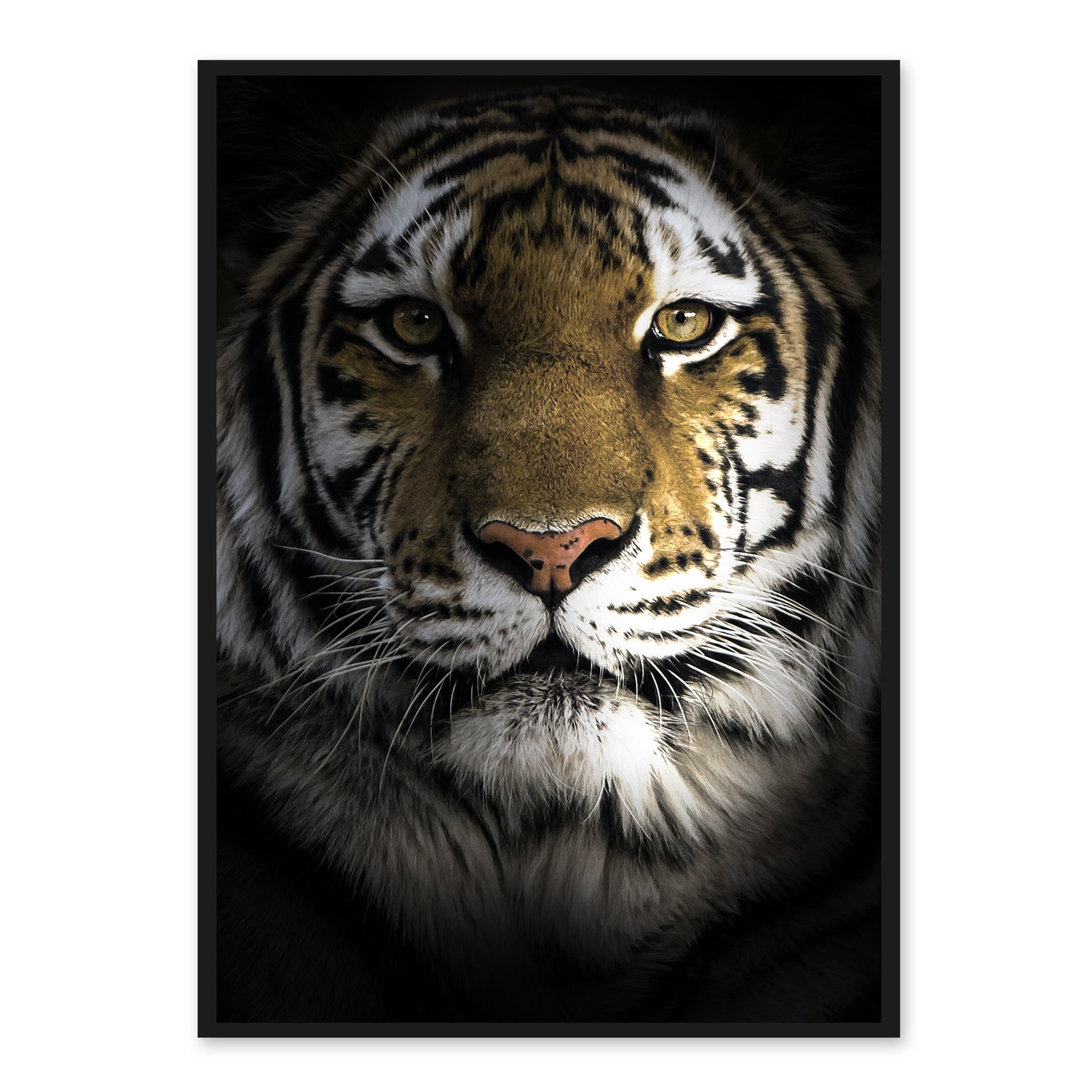 Dark Tiger - Plakat