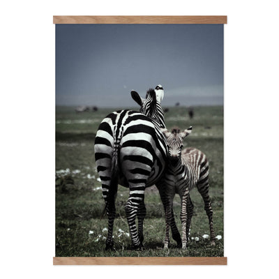 Mother Zebra - Plakat