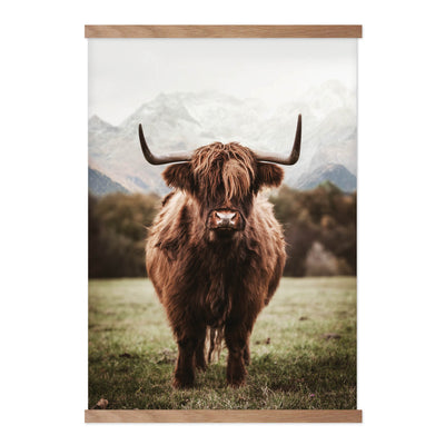 Highland Cattle - Plakat