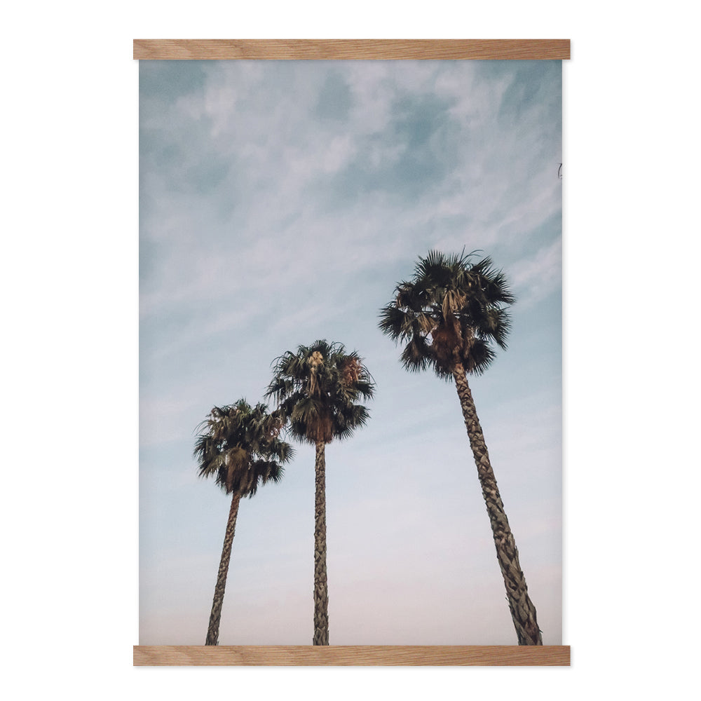 Palm Trees - Plakat
