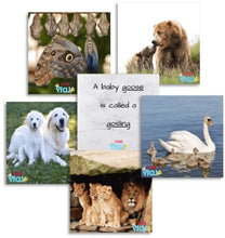 Load image into Gallery viewer, TEDDO PLAY 40 LEARNING CARDS - PARENT AND YOUNG ONES