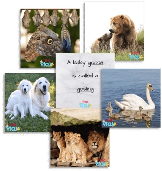 TEDDO PLAY 40 LEARNING CARDS - PARENT AND YOUNG ONES