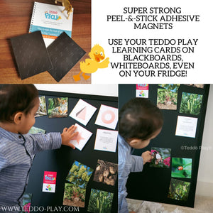 TEDDO PLAY 40 LEARNING CARDS- NAMES OF GROUPS (COLLECTIVE NOUNS)