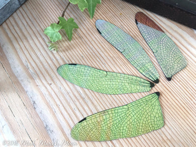 Dragonfly wing set for crafting Medium