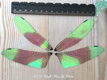 Dragonfly wing set for crafting Large