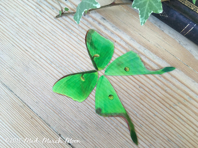 Luna Moth craft wings Mini size