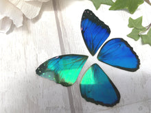 Blue Morpho Butterfly craft wings, Faux Butterfly wing set for crafts