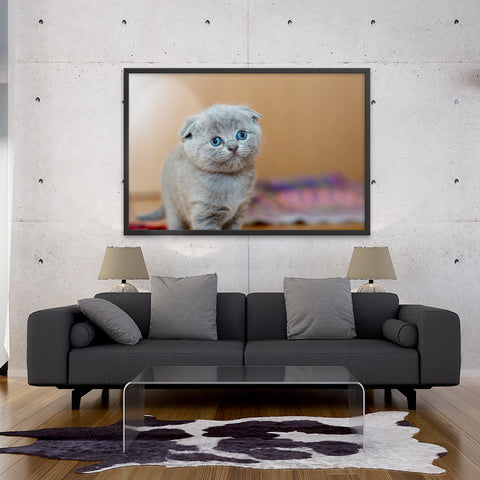 Tableau Chat Rigolo Scottish Fold