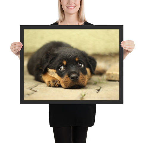 Tableau Rottweiler Chiot Timide