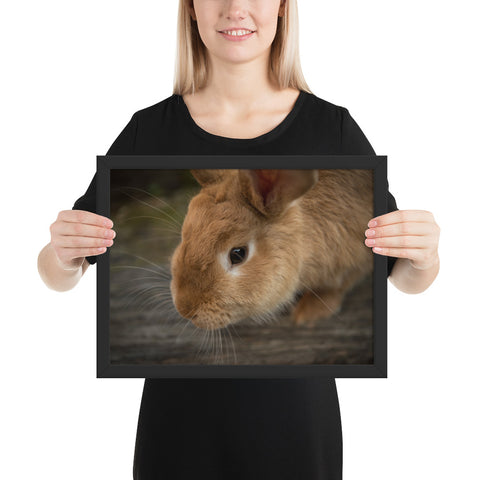 Tableau Animaux Lapin