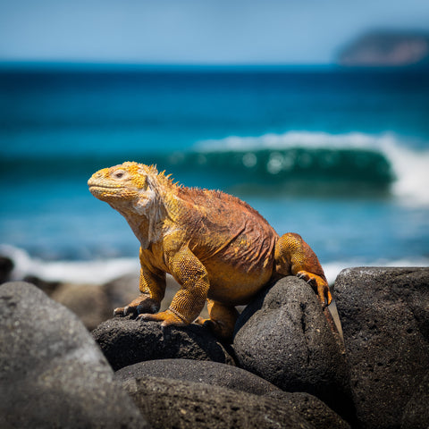 Ecuador and the Galapagos Islands, Ecotourism