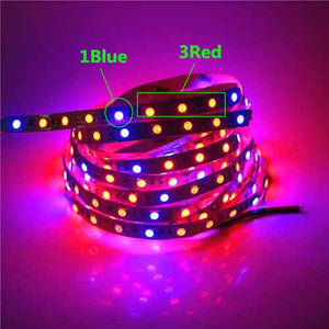 Plant Grow Lights LED Strip 5M Waterproof DC12V 3:1 Red & Blue