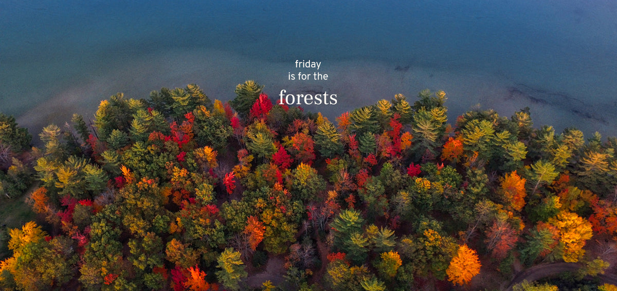 friday for the forests