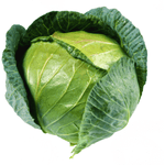 Cabbage Drumhead Whole