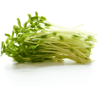 Sprouts Snow Pea
