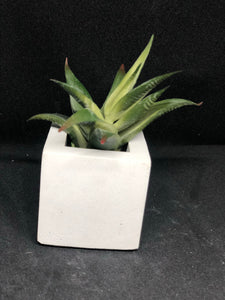 Small white cube
