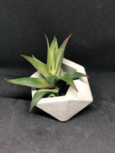 Load image into Gallery viewer, Medium grey Icosahedron planter