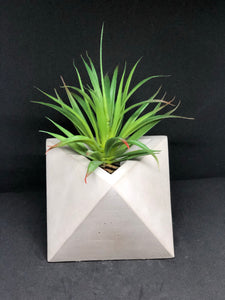 Large grey octahedron planter