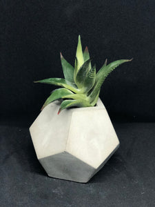 Small white dodecagon planter