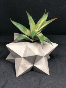 Grey star planter