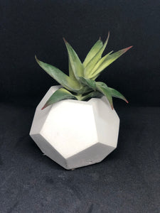 Small white dodecagon
