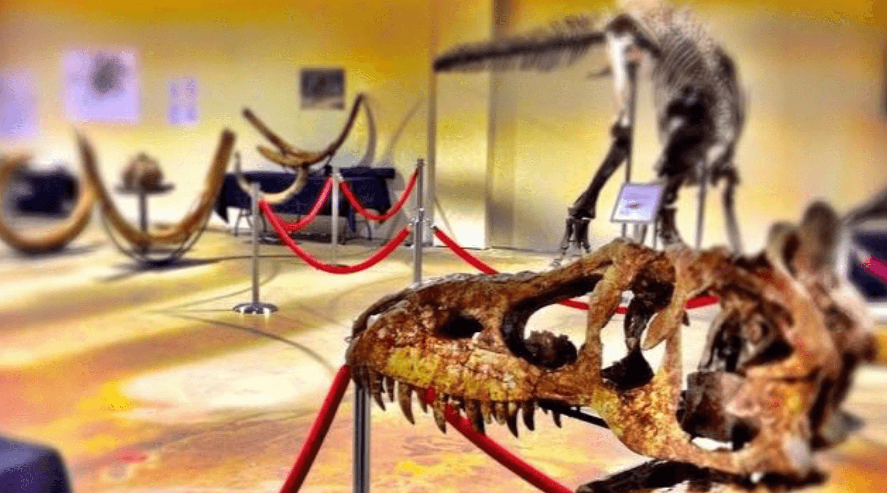 We do community events! Want to really wow your audience? Let them touch a dinosaur. Image of dinosaur specimin display.