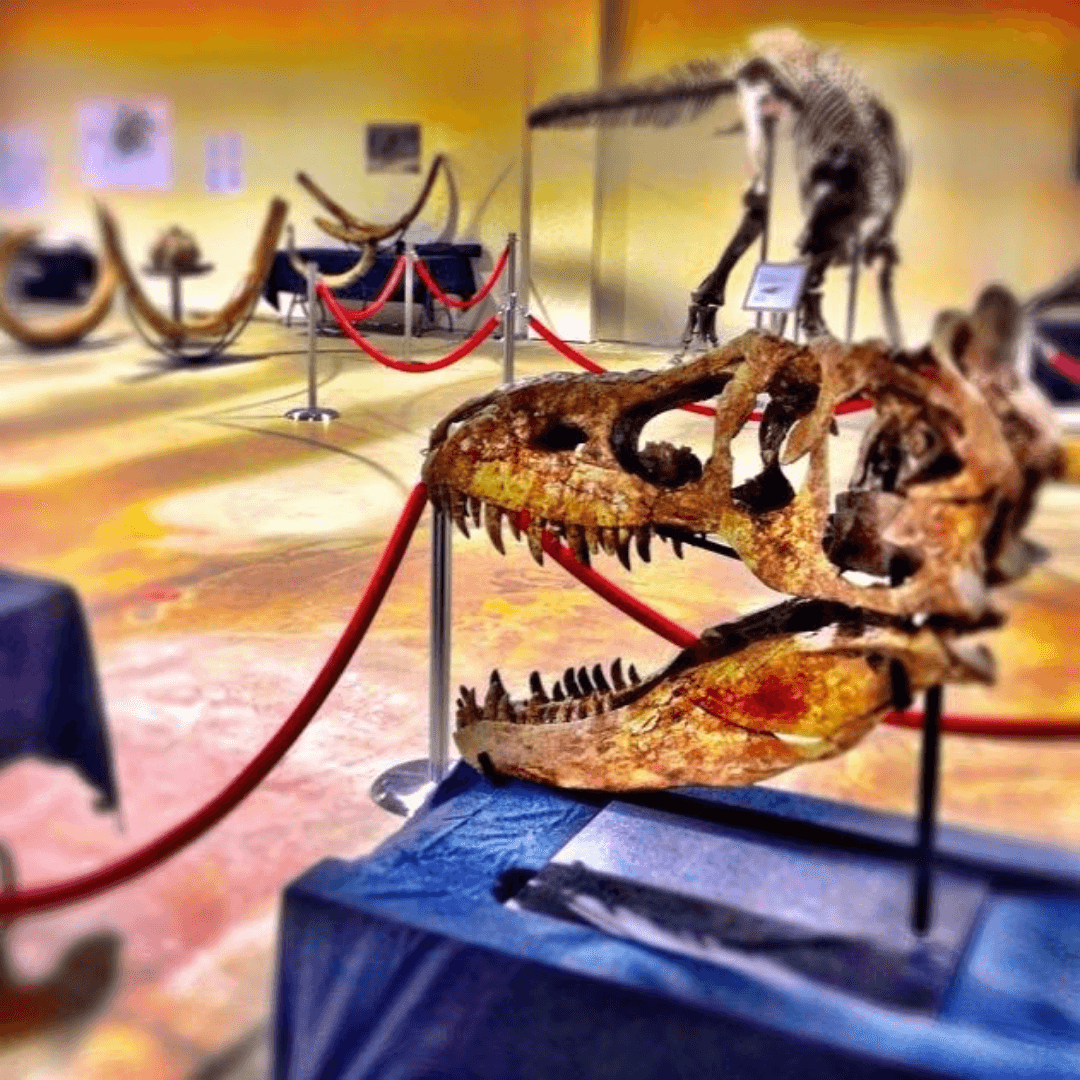 Community presentation; want to wow your audience? Let them touch a dinosaur bone. Image of dinosaur skeletons.