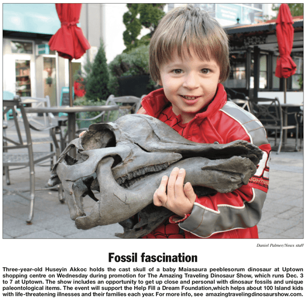 Saanich News article. A three-year-old holds the cast skull of a baby Maiasaura peeblesorum dinosaur